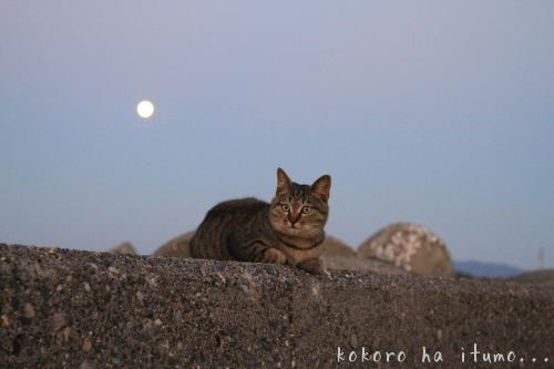 太陽と月の間に_b0153363_2282622.jpg