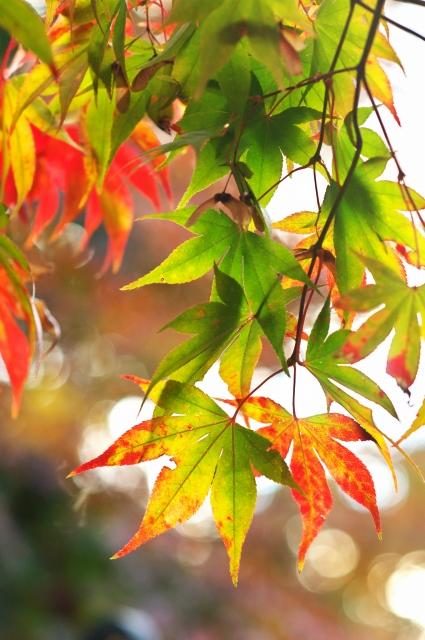 本土寺 2010秋 1_f0018464_2163321.jpg