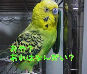 f0196665_0201490.jpg