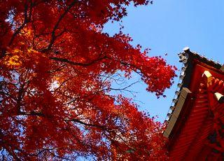 勝尾寺の紅葉に酔う_b0102572_17122599.jpg