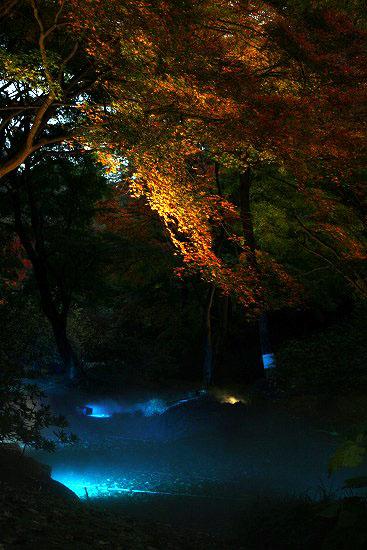 紅葉と大名庭園のライトアップ_f0030085_21141938.jpg