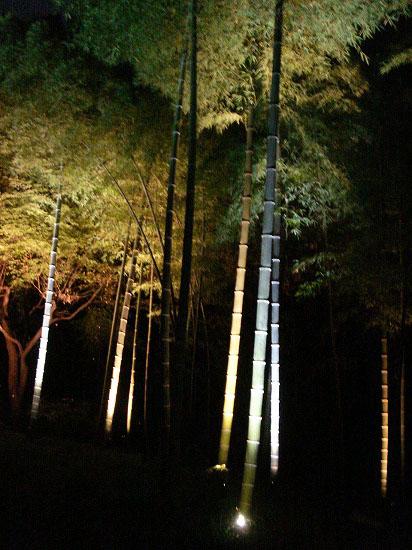 紅葉と大名庭園のライトアップ_f0030085_21351594.jpg
