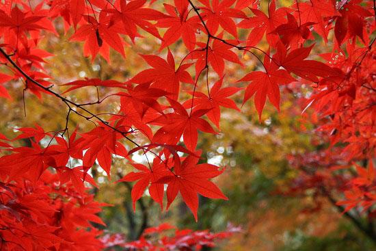 紅葉と大名庭園のライトアップ_f0030085_21365462.jpg