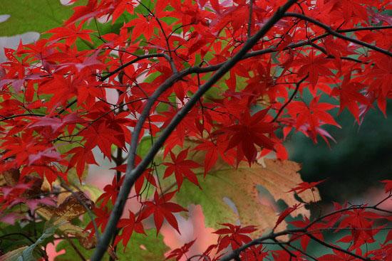 紅葉と大名庭園のライトアップ_f0030085_21371064.jpg