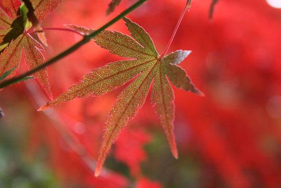 紅葉と大名庭園のライトアップ_f0030085_21372770.jpg