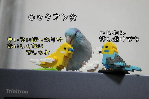 b0062090_1293153.jpg