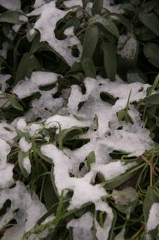 初雪です・・・_f0106597_2032484.jpg