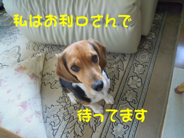 c0166622_1017677.jpg