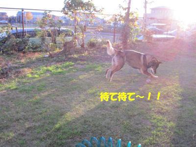 f0143123_20104860.jpg