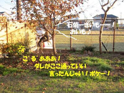 f0143123_20145810.jpg