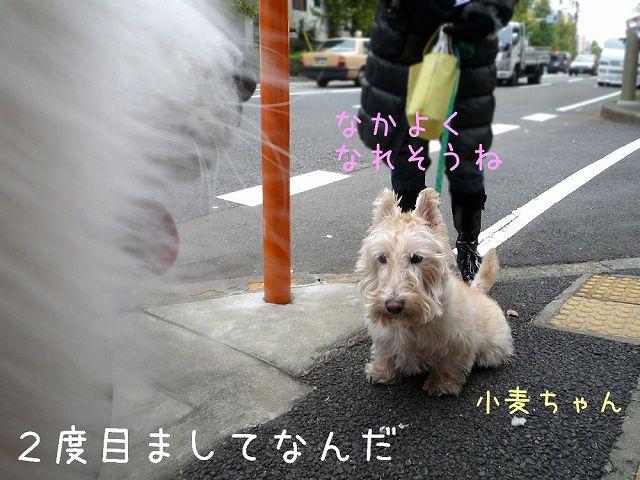 おば散歩ウィーク_c0062832_0512898.jpg