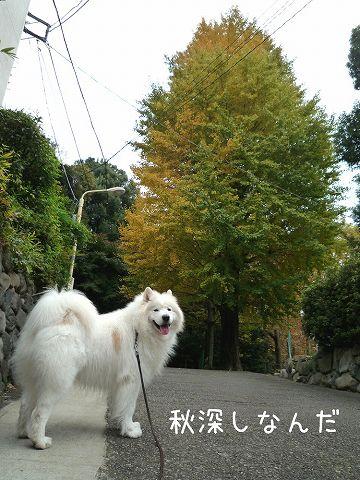 おば散歩ウィーク_c0062832_0513263.jpg