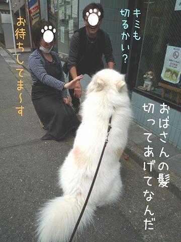 おば散歩ウィーク_c0062832_0513815.jpg