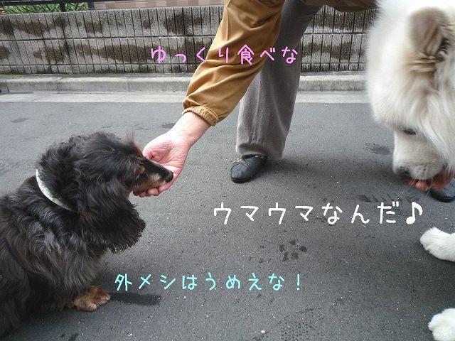 おば散歩ウィーク_c0062832_0514260.jpg