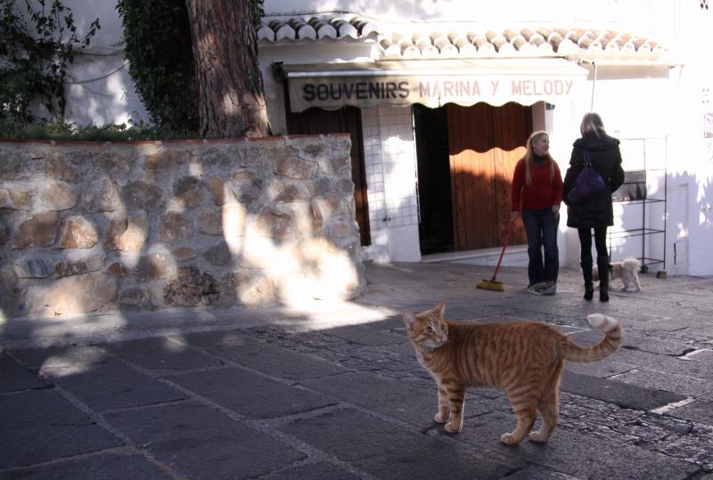 スペインの猫たち・その2_d0167436_743157.jpg