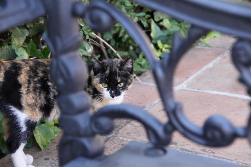 スペインの猫たち・その2_d0167436_74319100.jpg