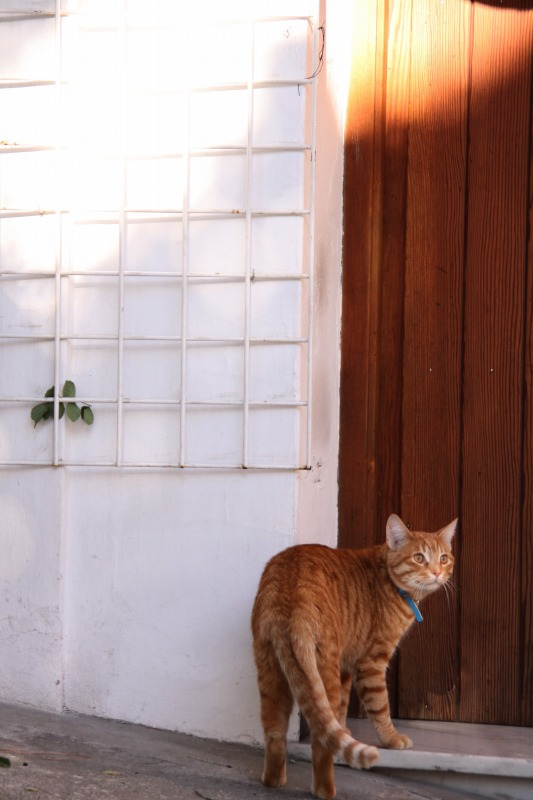 スペインの猫たち・その2_d0167436_7432146.jpg