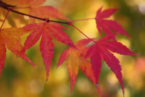 f0230738_14505426.jpg