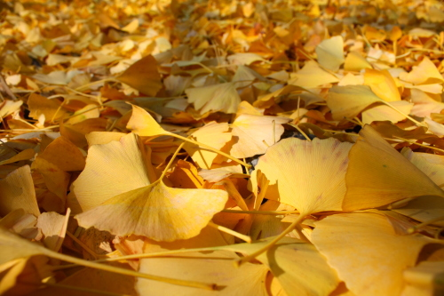 f0230738_15434347.jpg