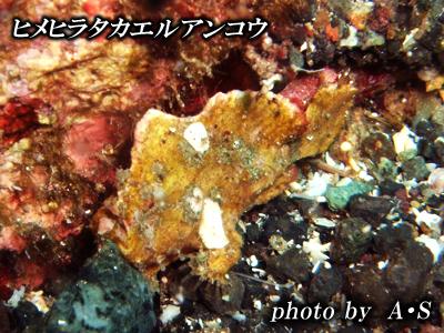 Divehouse Kanaloa  八丈島 ダイビングログ_b0189640_2154112.jpg