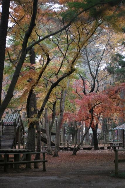 清水公園_b0177950_803724.jpg