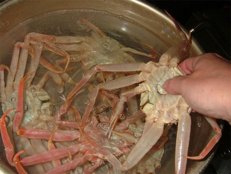 蟹雑炊には蟹!!これだけ入れます!! _c0110051_17111589.jpg