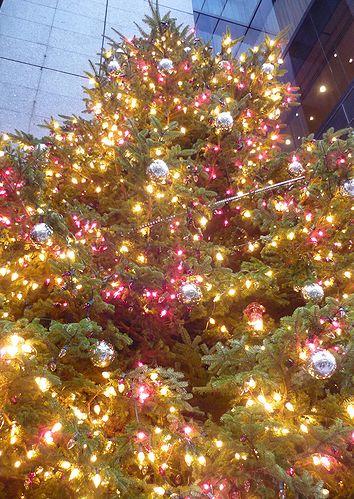 銀座の街のChristmas@LADUREE ラデュレ @「命の輝きを宿す森」@ミキモトジャンボクリスマスツリー *☆。†_a0053662_22433541.jpg