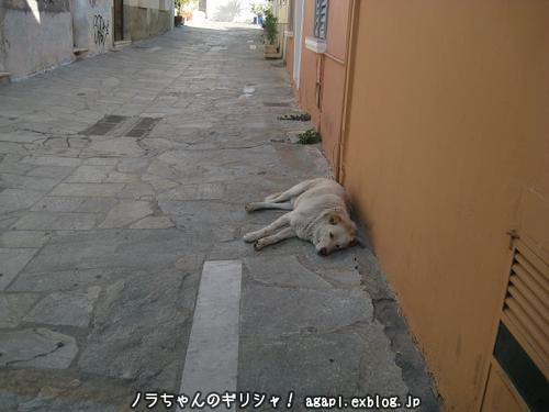 野良犬アルゴ、親友パノラミコの家の門前で昼寝_f0037264_3153959.jpg