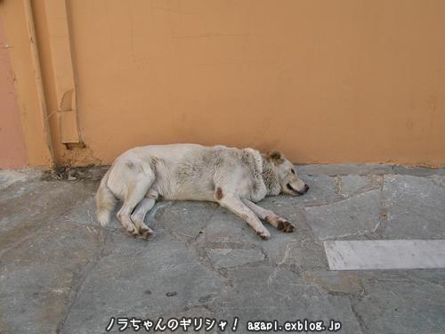 野良犬アルゴ、親友パノラミコの家の門前で昼寝_f0037264_323720.jpg