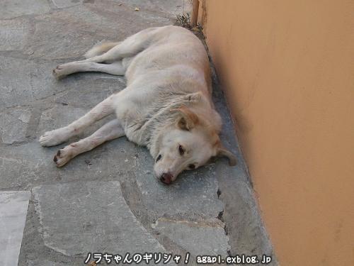 野良犬アルゴ、親友パノラミコの家の門前で昼寝_f0037264_3423261.jpg