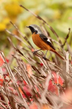 ★先週末の鳥類園(2010.11.20~21、23)_e0046474_036468.jpg