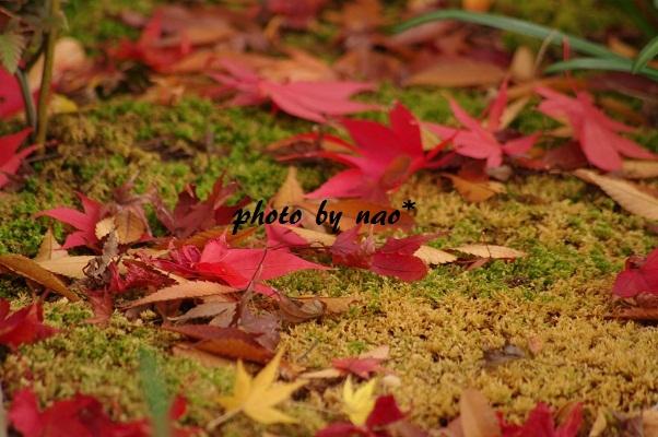 f0152674_1757636.jpg