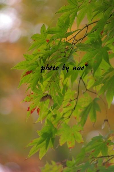 f0152674_18113942.jpg