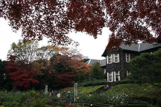 旧古河庭園の紅葉と、薔薇_f0030085_20325411.jpg