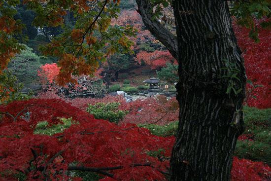 旧古河庭園の紅葉と、薔薇_f0030085_20375797.jpg