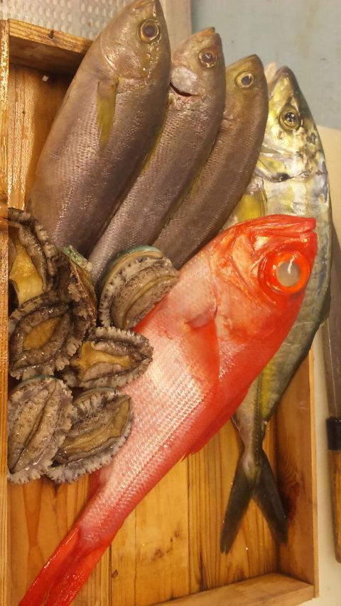 本日の魚たちでした_e0183396_2357243.jpg