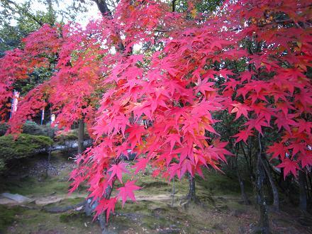 円通寺の紅葉_f0175403_16353553.jpg