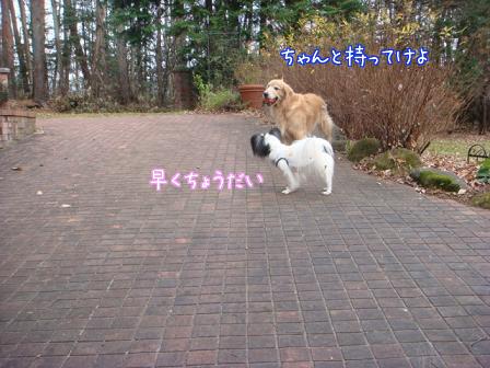 f0064906_1764211.jpg