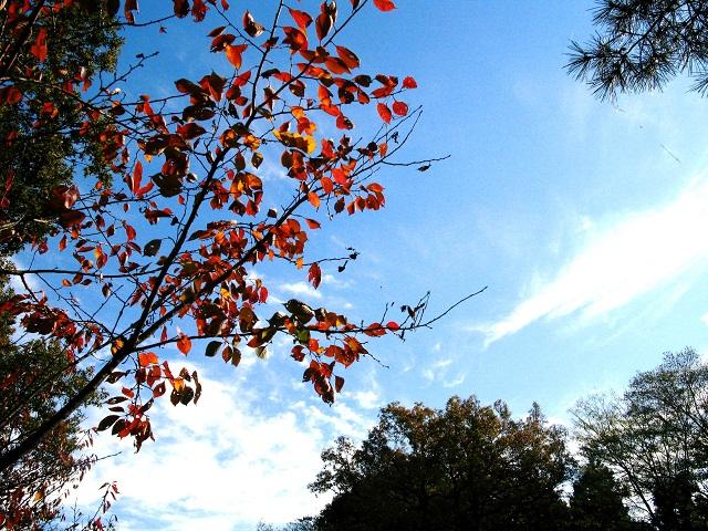 見上げてみよう きれいな空を_f0214527_1537628.jpg