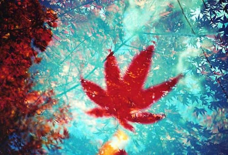 多重露光の紅葉 : 女子フォト