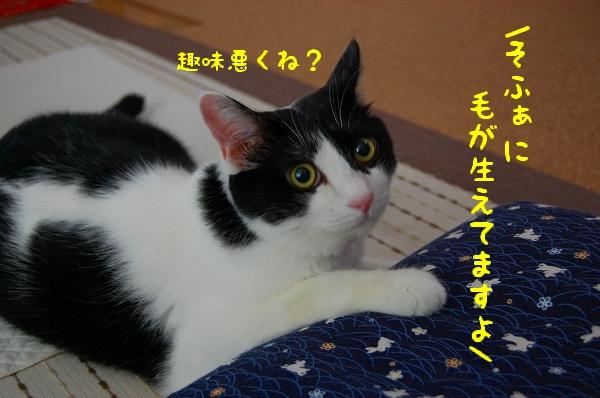 c0181639_13046.jpg