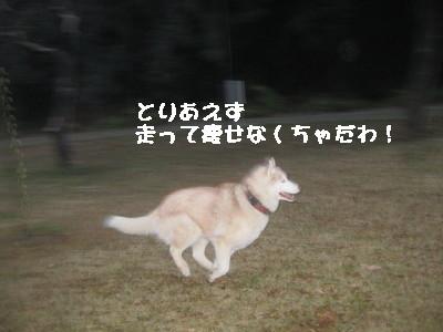 e0121548_2112857.jpg