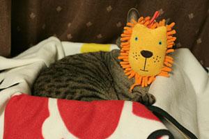 ライオンだー!!!_d0034352_22331062.jpg