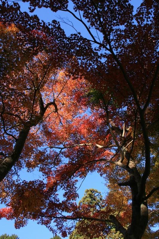 法多山尊永寺の仁王門と紅葉♪_a0167759_22313159.jpg