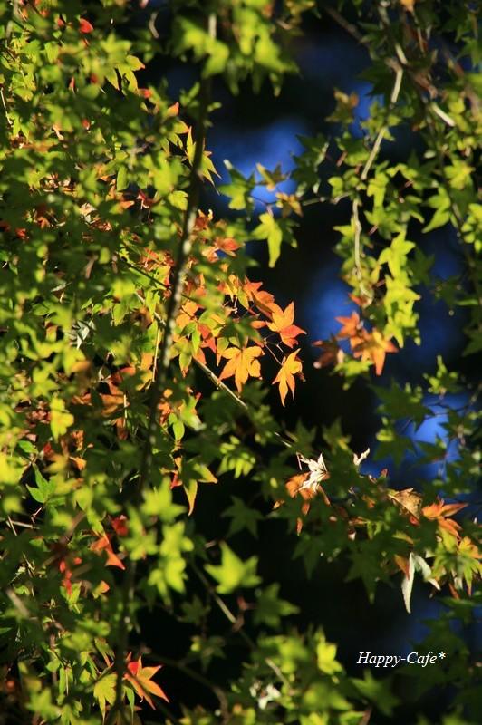 法多山尊永寺の仁王門と紅葉♪_a0167759_22315715.jpg