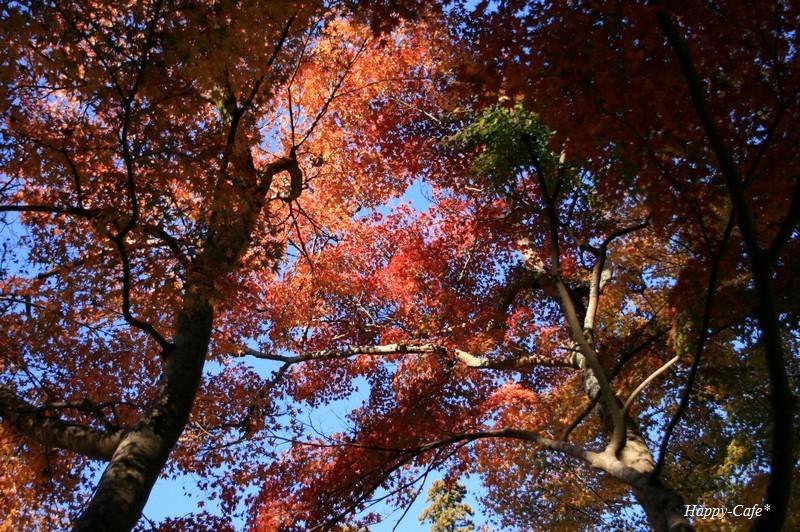 法多山尊永寺の仁王門と紅葉♪_a0167759_2248497.jpg