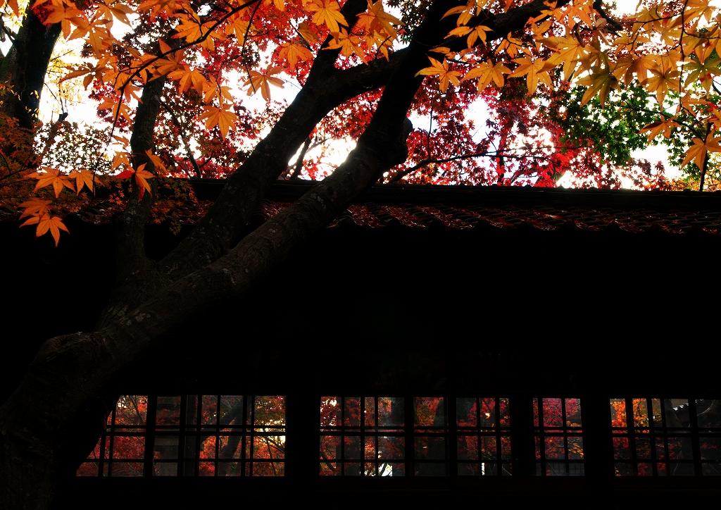 本土寺 2010秋 2_f0018464_5224034.jpg