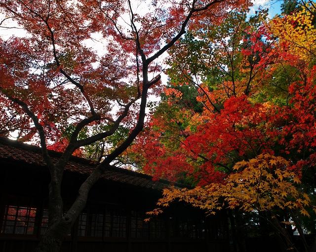 本土寺 2010秋 2_f0018464_5225372.jpg