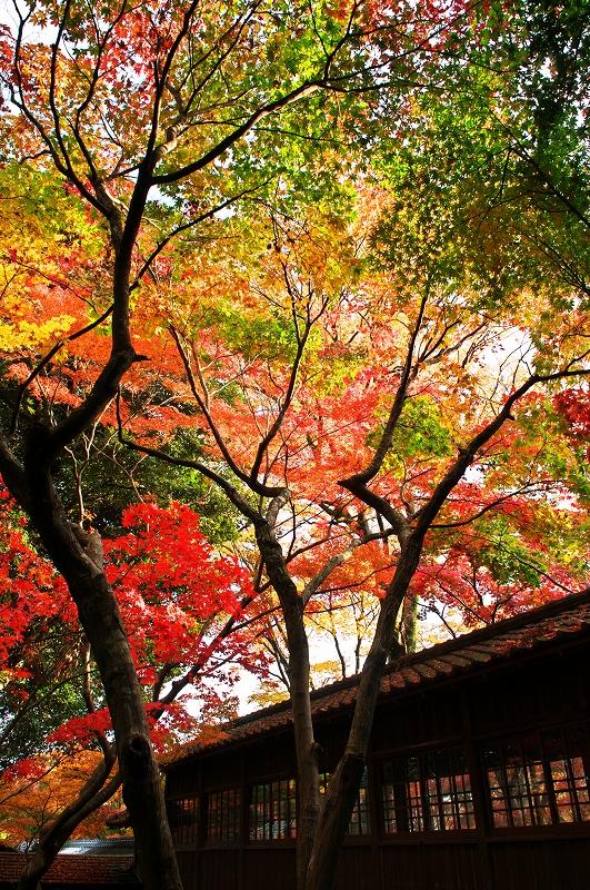 本土寺 2010秋 2_f0018464_5231126.jpg