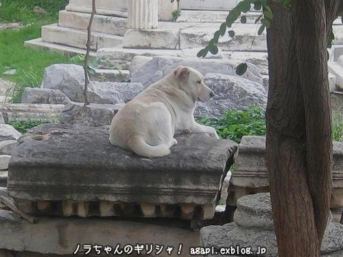 風の塔へ里帰りしていた野良犬のアルゴ_f0037264_1171489.jpg